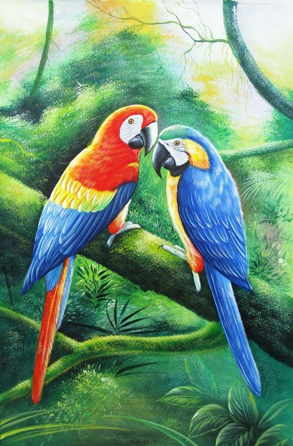 417 Best Parrots Amp Parakeets Art Images On Pinterest