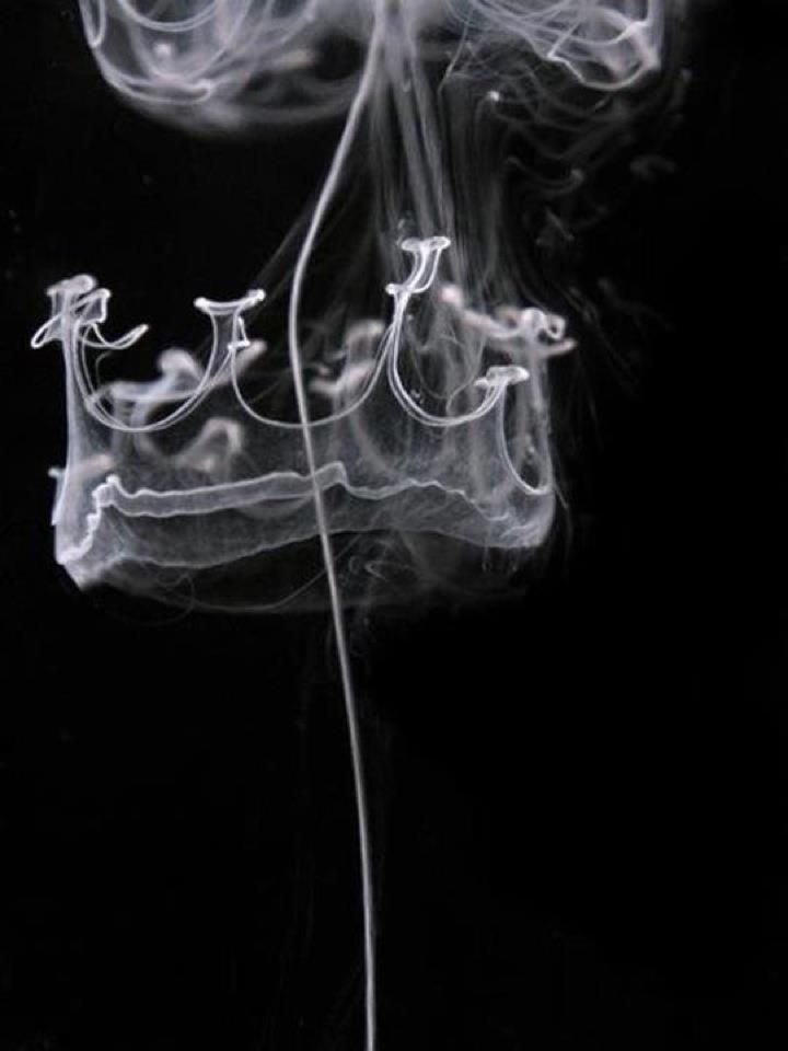 smoke ring :: crown. ( photo by Maximilian Jaenicke )