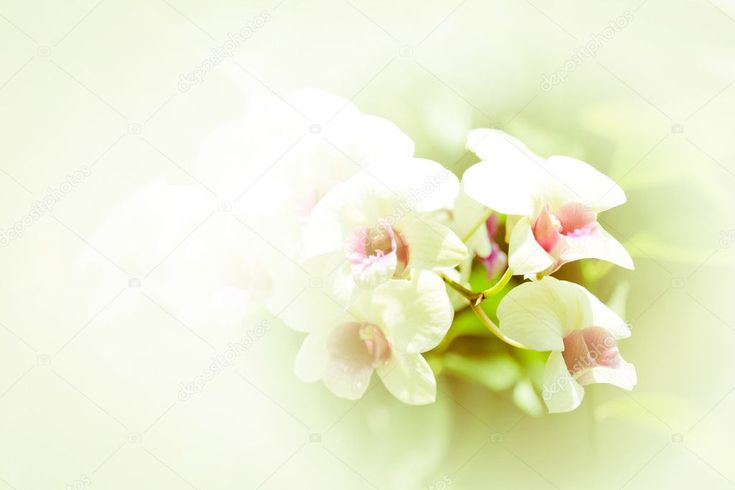 White Of Orchid Flower Stock Photo Ad Orchid White Flower Photo Ad In 2020 Orchid Flower Orchids Flowers