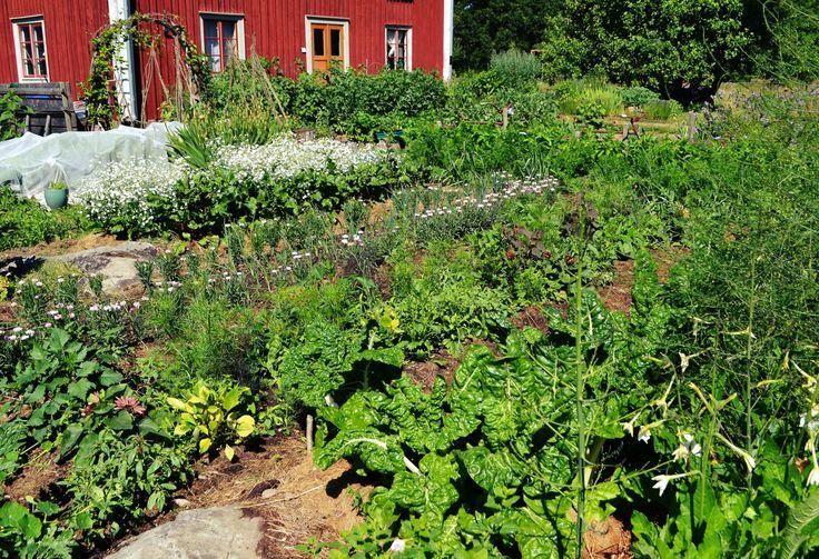Skillnadens Trädgård - odlingsinspiration