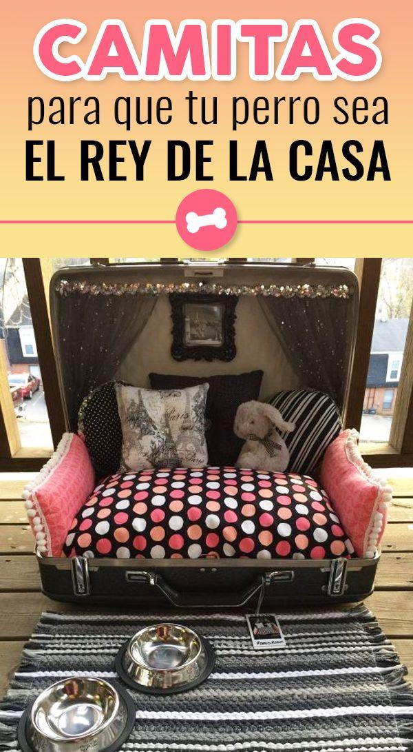 Elige una camita que se adapte al espacio que tienes destinado para tu mascota en el hogar y haz que se sienta toda la comodidad y el amor del mundo. World, Dog Owners, Dog Beds, Bed Designs, Room, Space, Pets, Gatos, Animales