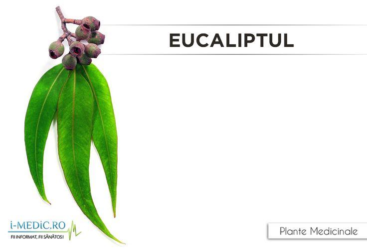 Frunzele si ramurile de eucalipt contin substante care faciliteaza tinerea sub control a nivelului de zahar din sange. De asemenea, aceasta planta regaseste in alcatuirea sa substante care combat fungii si bacteriile daunatoare din organism - http://www.i-medic.ro/plante/eucaliptul