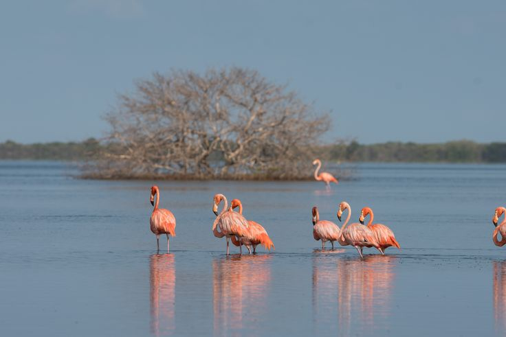 Wildlife Park Flamingos in the Guajira Colombia, this site is a spectacle and not to mention the locals and attention. After the visit you can eat a typical meal of the Caribbean.