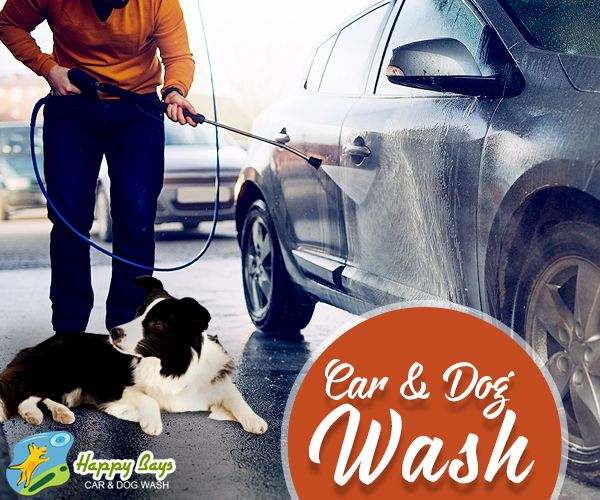 22 best self service dog wash images on pinterest dog wash when you come to wash your car get your pet cleaned too solutioingenieria Gallery