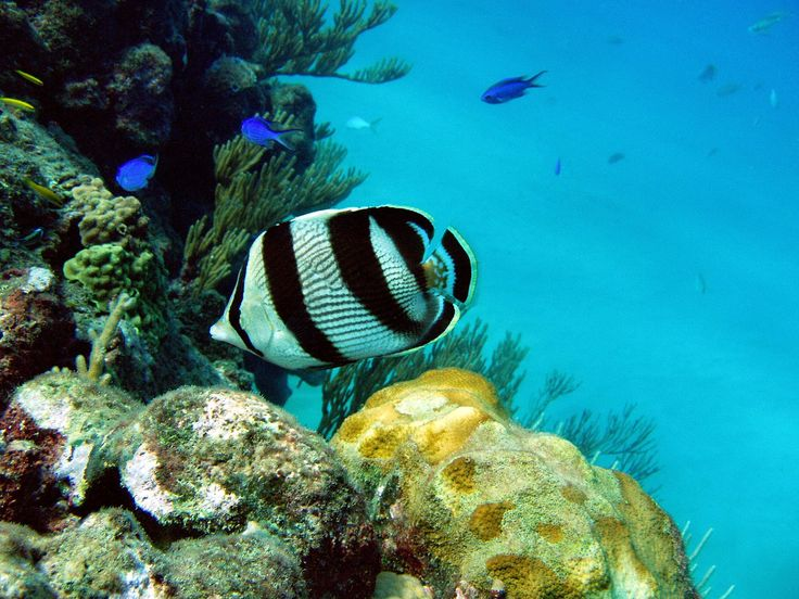 Fish and coral of Sosua beach