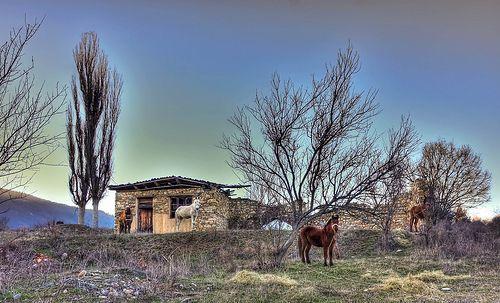 Horses pose , Exohi Drama , Greece