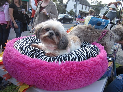 After5 Gift's in Skippack will be hosting their 3rd annual Winetober Fest this October, and all dogs are invited!!!  Not only that, but proceeds from the event go to a different rescue each year.  This year Winetober Fest is proud to sponsor Harley's Haven Animal Rescue in Souderton.  http://www.montcohappening.com/dog-friendly-festival-skippack