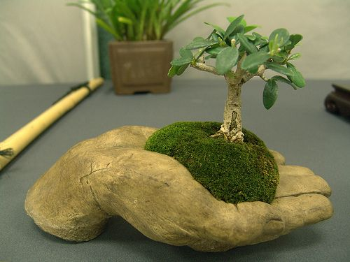 mame bonsai by teresafranco, via Flickr