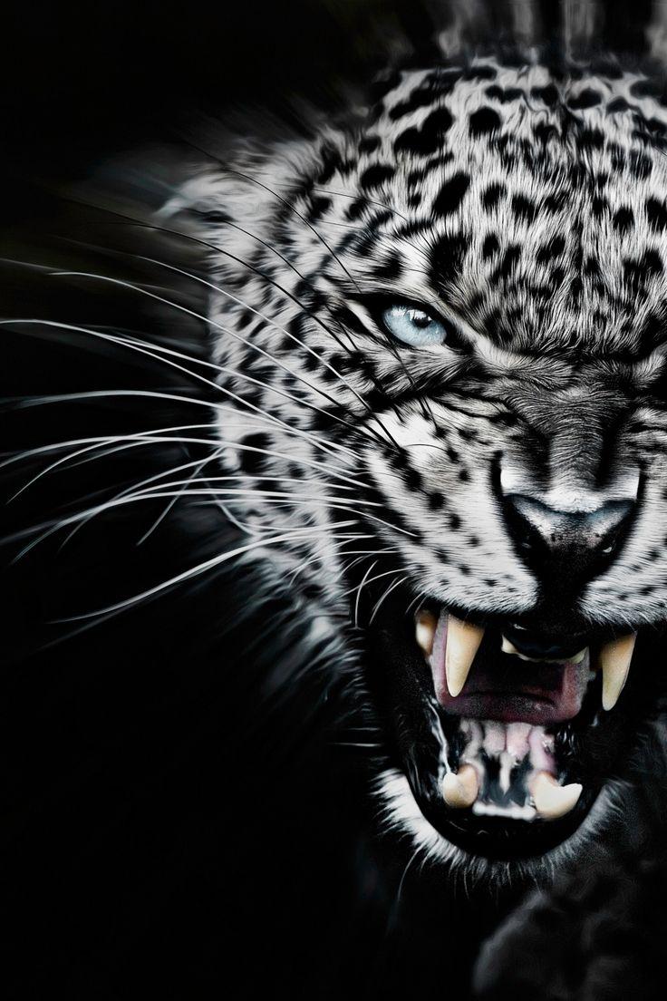 javysb:  Very Angry by ©Paul Keates | JavysB | IG