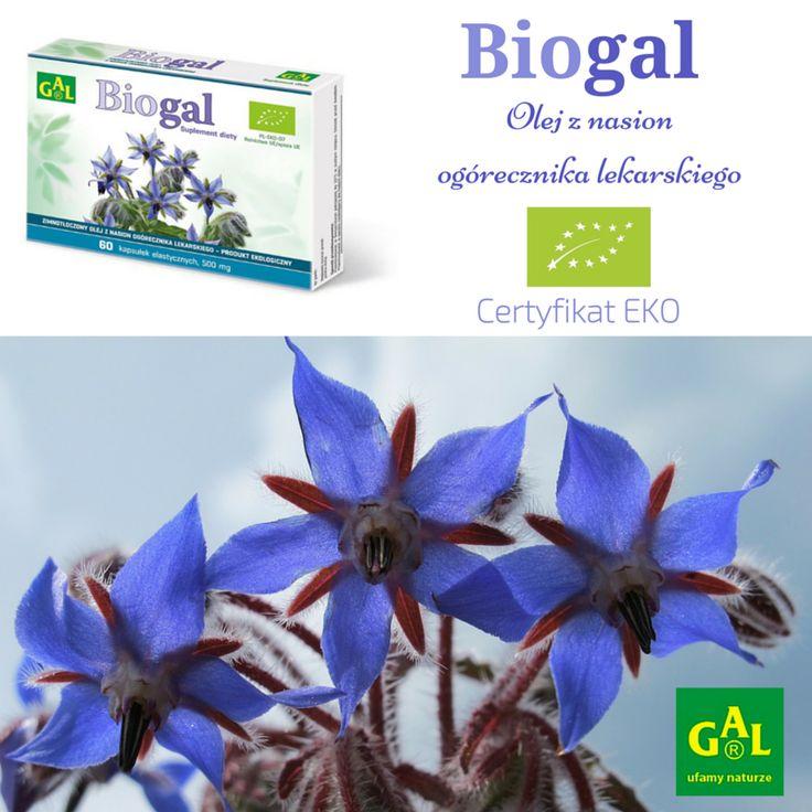 BIOGAL // Naturalny suplement diety z olejem z nasion ogórecznika lekarskiego. Certyfikat EKO.  http://www.gal.com.pl/aktualnosci/certyfikat-eko-dla-biogal.html