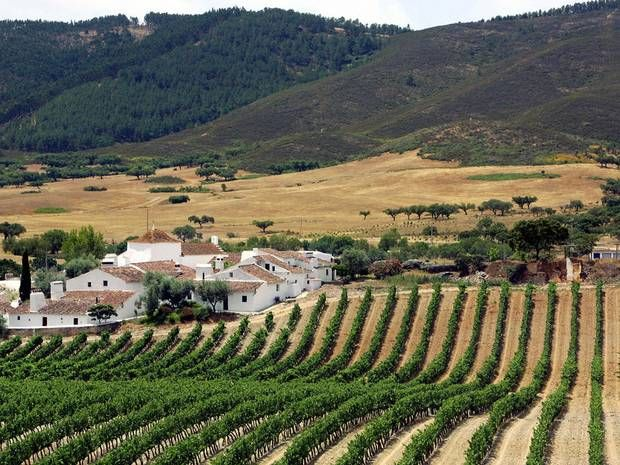 Portugal: 'Where the Algarve may as well be another country' | The Independent | MARK JONES   |  16 September 2012 | It's time British travellers realised there's more to enjoy than the sun-soaked south coast, says Mark Jones | Photo: Vineyards of the Alentejo