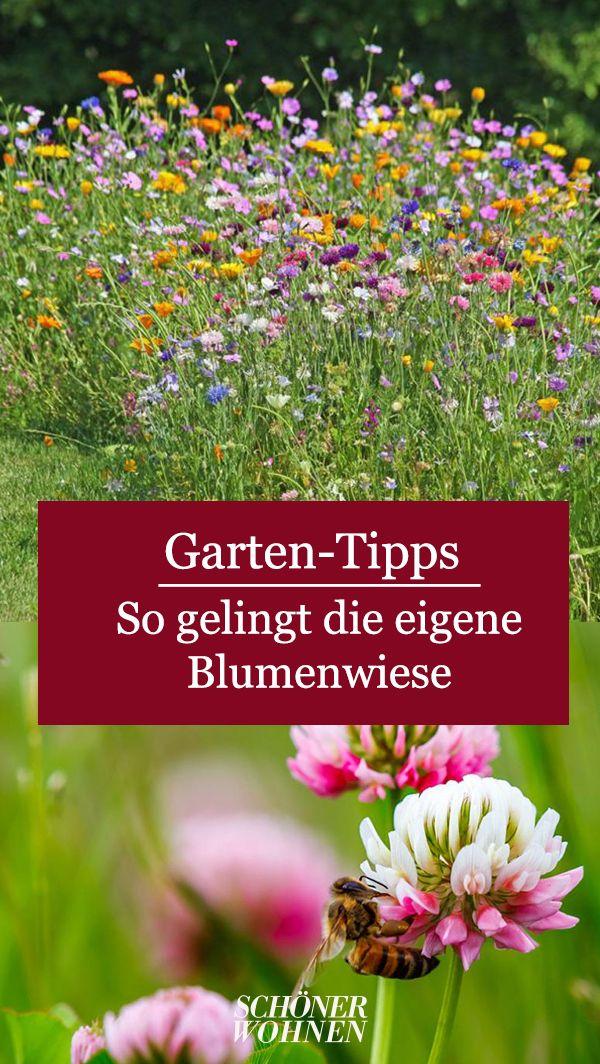 Blumenwiese Anlegen Tipps Fur Einen Bluhenden Garten Blumenwiese Anlegen Garten Blumen Wiese
