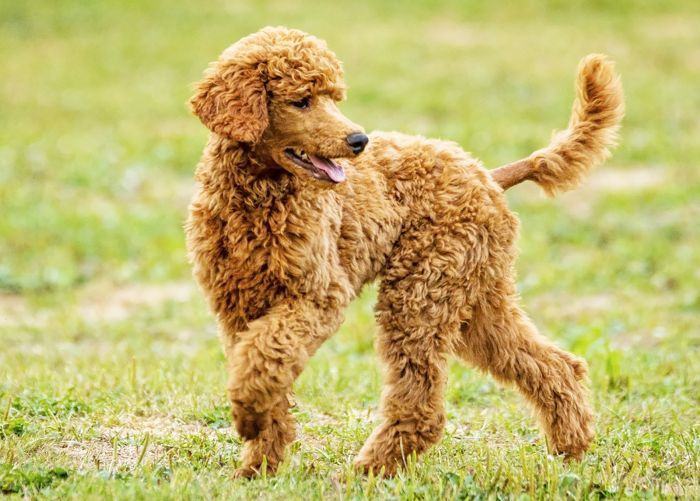 The 15 Smartest Dog Breeds May Actually Be Perfect For You Irish