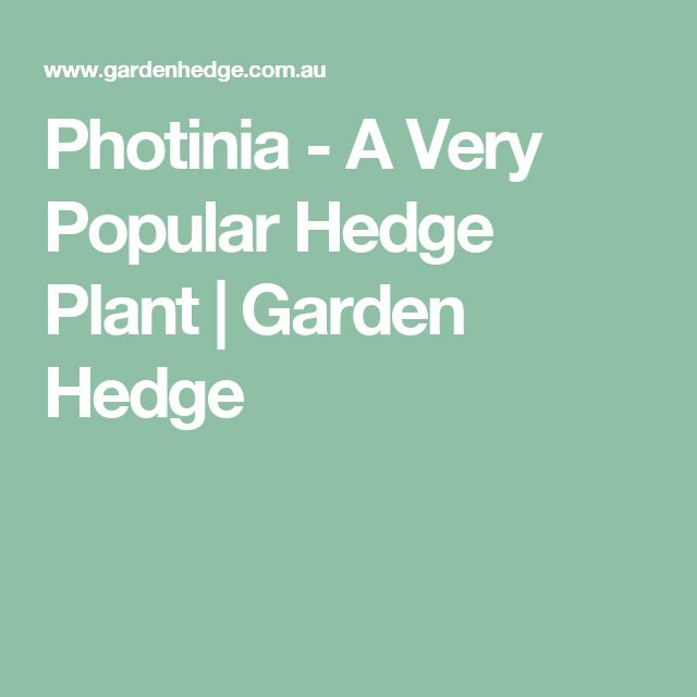Photinia - A Very Popular Hedge Plant | Garden Hedge