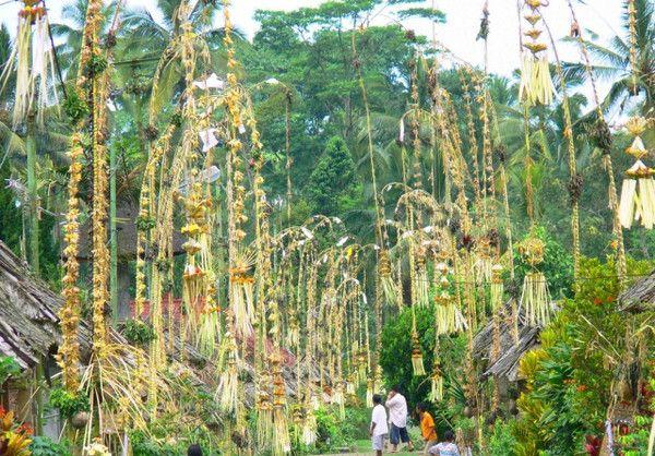 Galungan Holiday in Bali   bigtreefarms