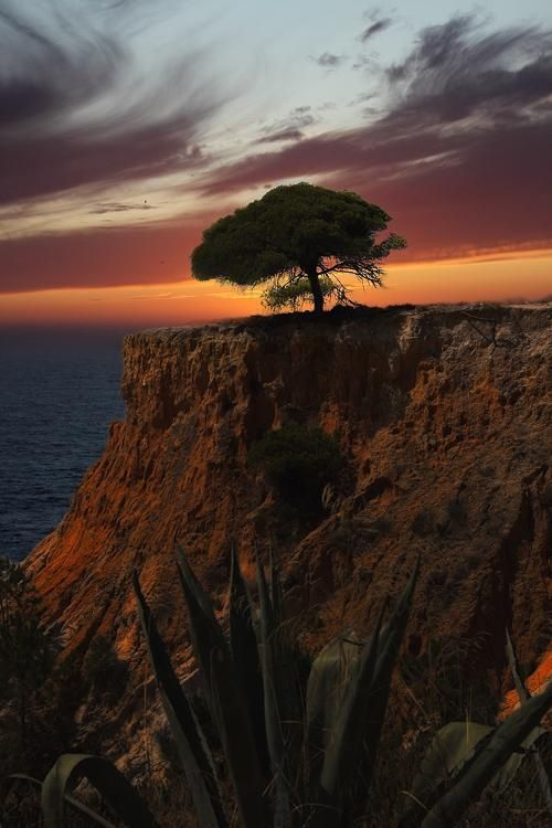 Sunset in the Pine Cliff (Portugal)