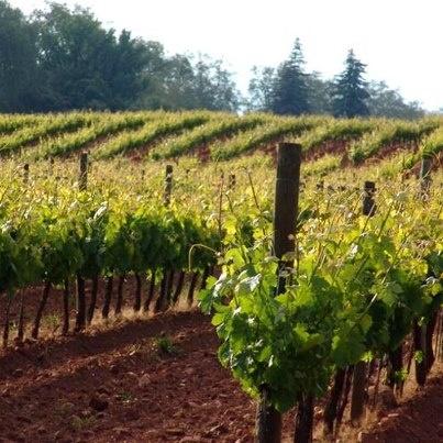 Alentejo wine.... #Alentejo #Portugal