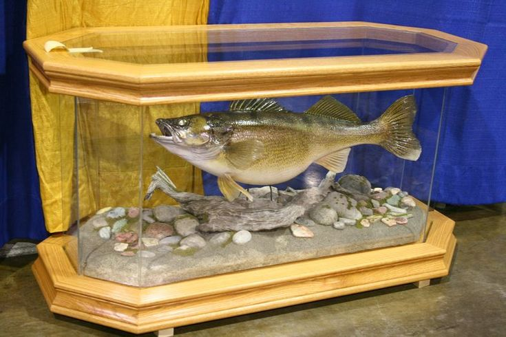 Cool Walleye Mount Taxidermy Pinterest The O 39 Jays Style And Pictures