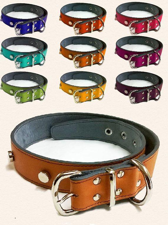 Collare in pelle colorati per cani _ Leather dog di Ciccioli