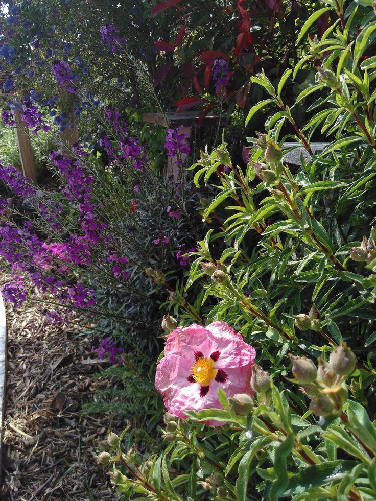 tourisme-auvergne-les jardins des hurlevents http://www.plantes-vivaces-hurlevents.com/