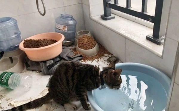 Wuhan Prayforwuhan In 2020 Pet Life Pets Cats