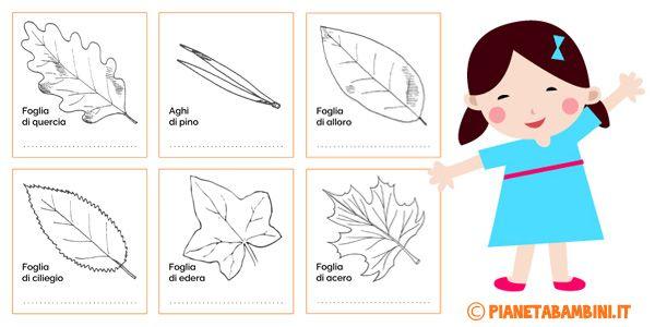Classificazione delle foglie: schede didattiche da stampare