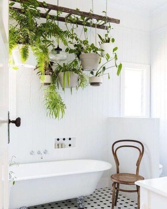 Bathroom hanging plants