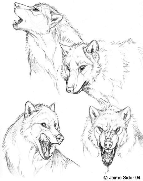Dyre+Loup+Sketches+by+Emryswolf.deviantart.com+on+@deviantART
