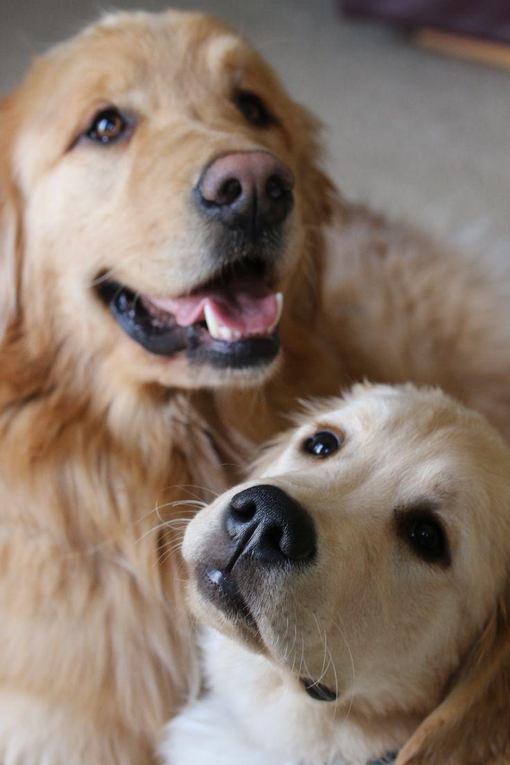 Lovely, lovely, lovely dogs!!