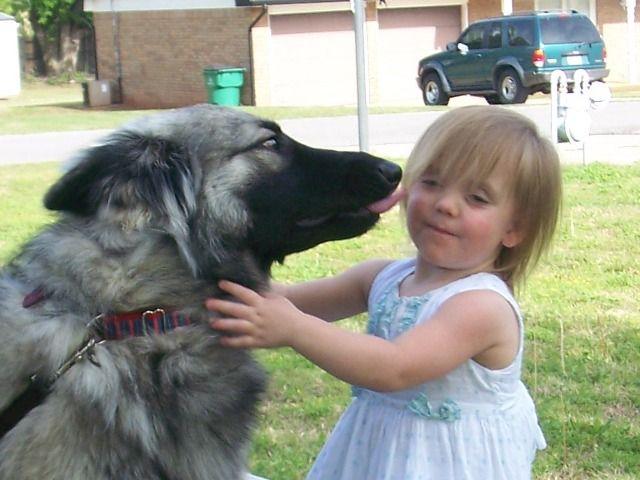 Shiloh Shepherd giving kisses. : )