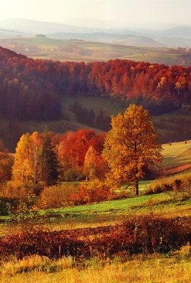 polish countryside. I want to go to there you can truly escape busy life Łatwo tu uciec od zgiełku