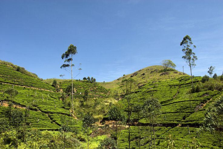 Канди - свещеното сърце на Шри Ланка - статия за Шри Ланка - Насам Натам