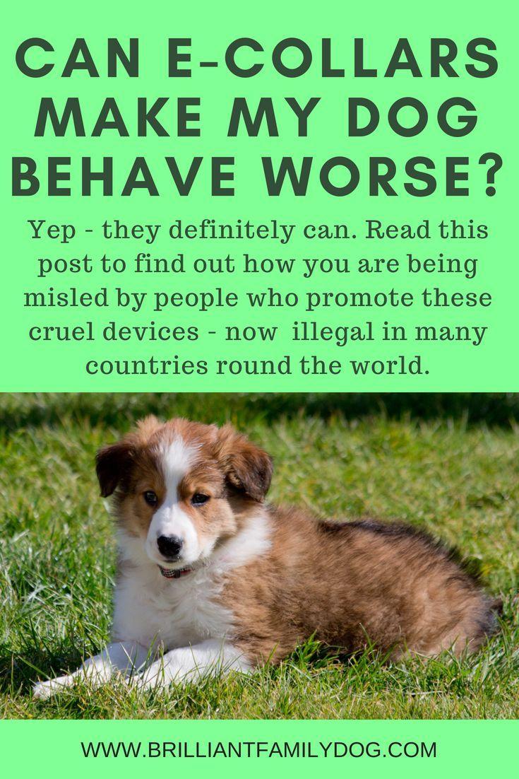 Hooray Shock Collars Banned In Uk Puppies Puppy Training Dog Training