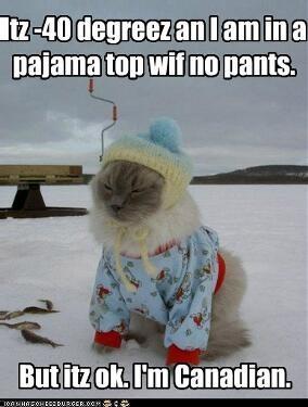 Canadian kitty
