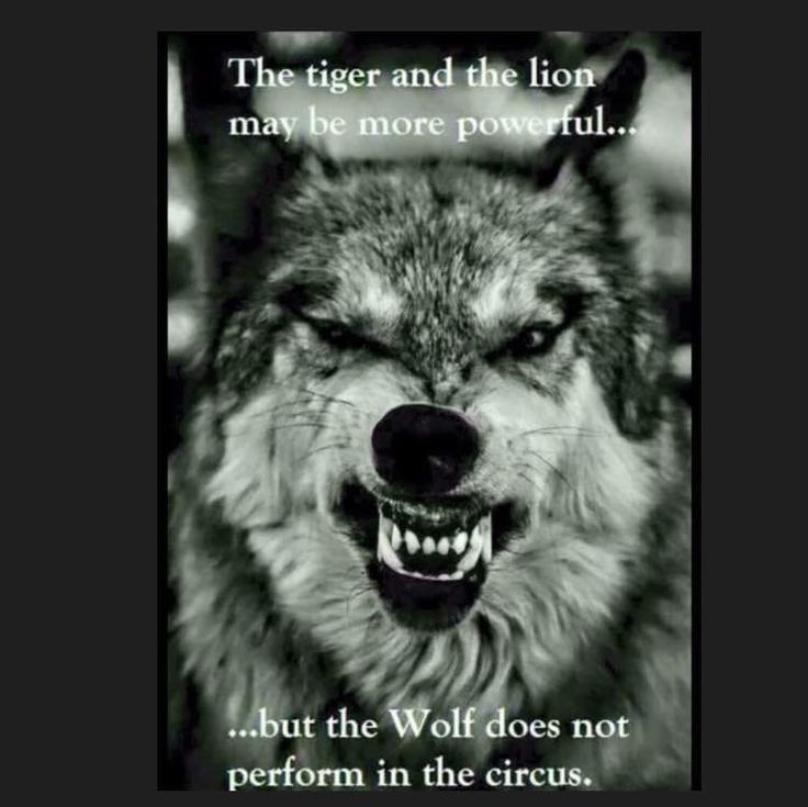 17 Best images about Lone wolf on Pinterest   Wolves, Wolf ...