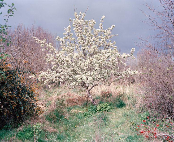 Robert Ellis, Lorna's Garden, Flak Photo