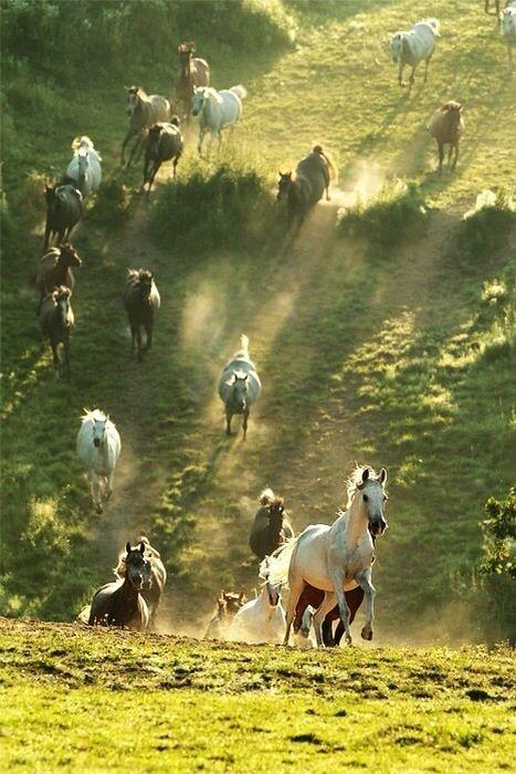 Best 25+ Wild horses running ideas on Pinterest | Horses ... - photo#32