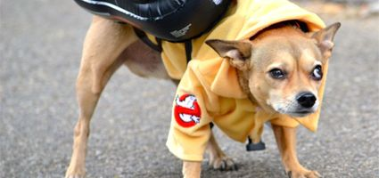 can dogs see ghosts #dogster #ilovemydogs #dognews