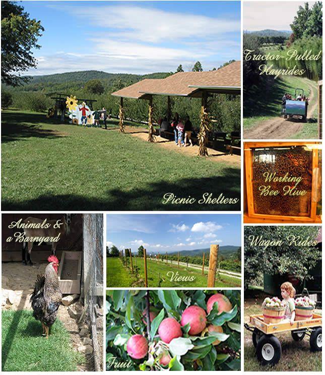 Enjoy panaromic views, barn animals, apples, pumpkins and fall family memory making at Sky Top Orchard