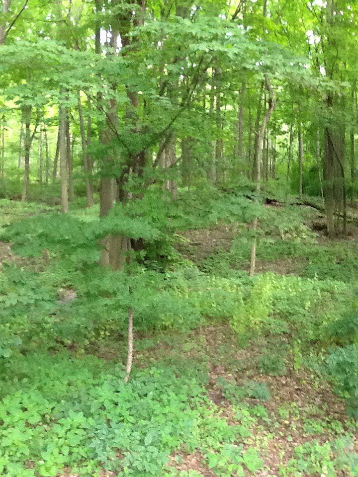 Grimsby escarpment, Ontario