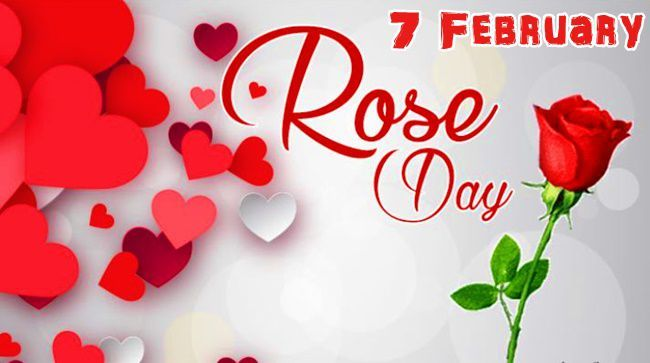 When To Celebrate Valentine S Week Rose Day 2020 Date Day