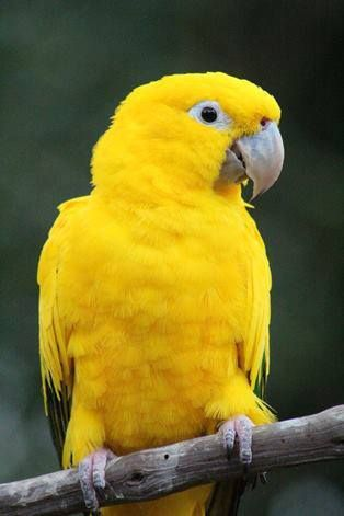 Cute Parakeet Wallpaper 319 Best ☮ Free As A Bird Images On Pinterest