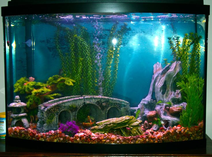 Small Fish Tank Decoration Design ~ http://www.lookmyhomes.com/amazing-fish-tank-decoration/