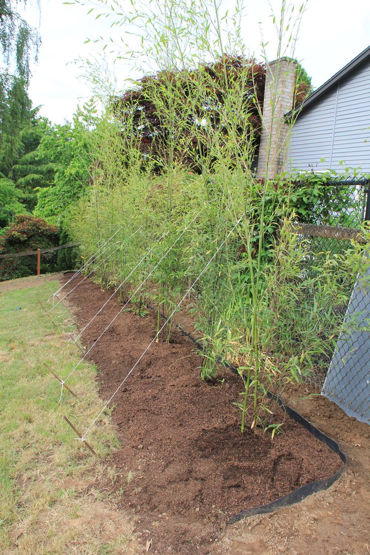 best 25 bamboo barrier ideas on pinterest how to plant bamboo