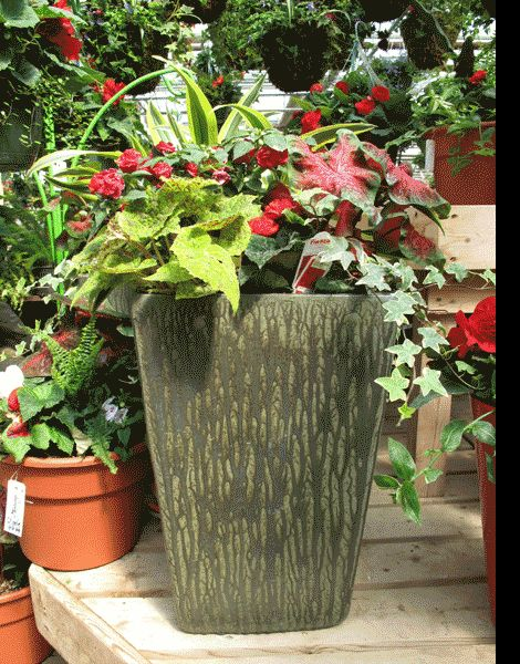 17 best images about container gardening on pinterest fall containers planters and elephant ears - Container gardens for shade ...