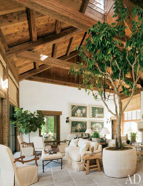 A large ficus tree gives this living room a forest-like air.