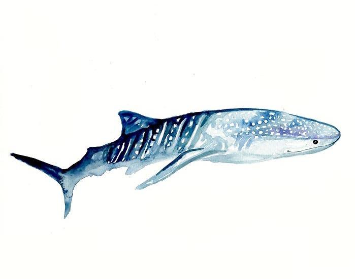 SHARK WHALE by DIMDI Original watercolor painting 10X8inch