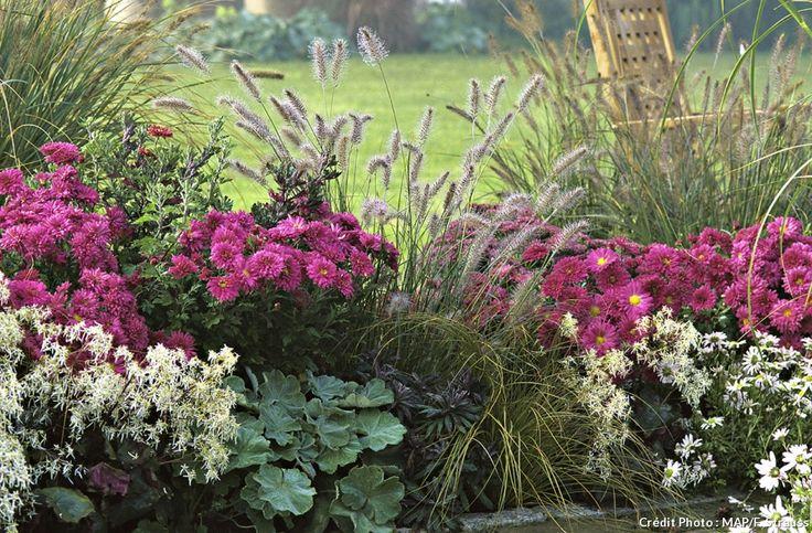 17 meilleures images propos de chrysanth me sur - Chrysantheme entretien ...