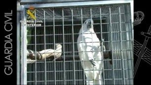 APAEC (Asociación Protectora de Animales Exóticos de Cataluña): DESARTICULADA RED DE TRAFICANTES DE EXÓTICOS