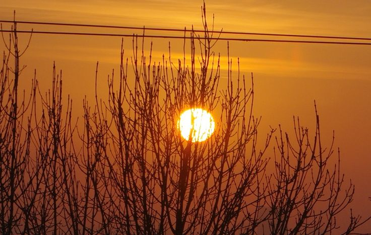 sun circle dressed on with branches